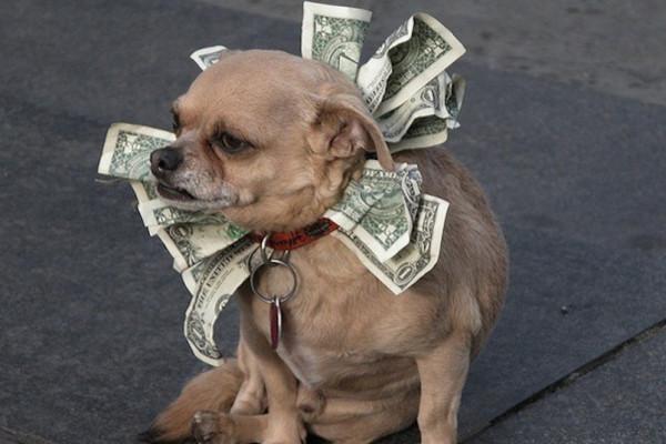 cane soldi
