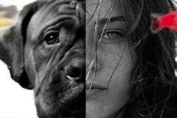 cane donna violenza