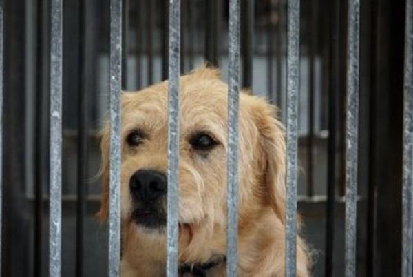 cane gabbia