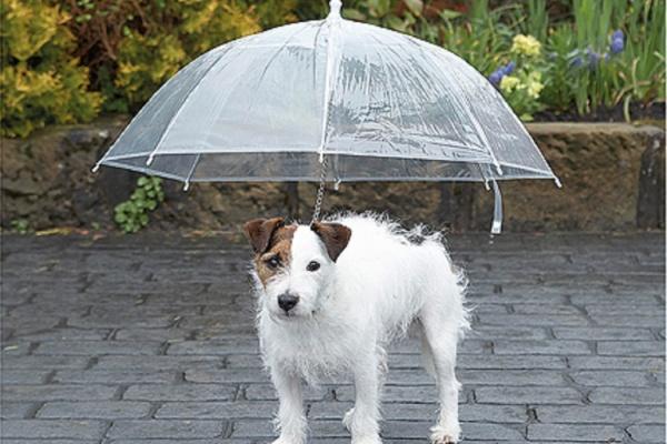 ombrello cane2