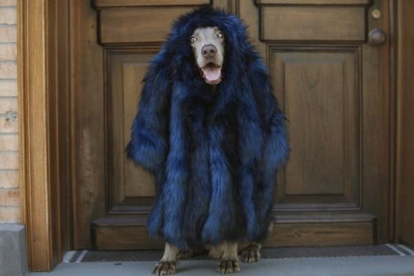 fashion dog8