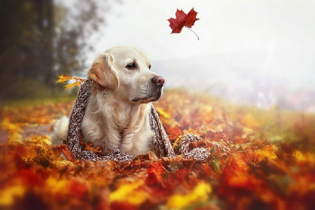 cani autunno