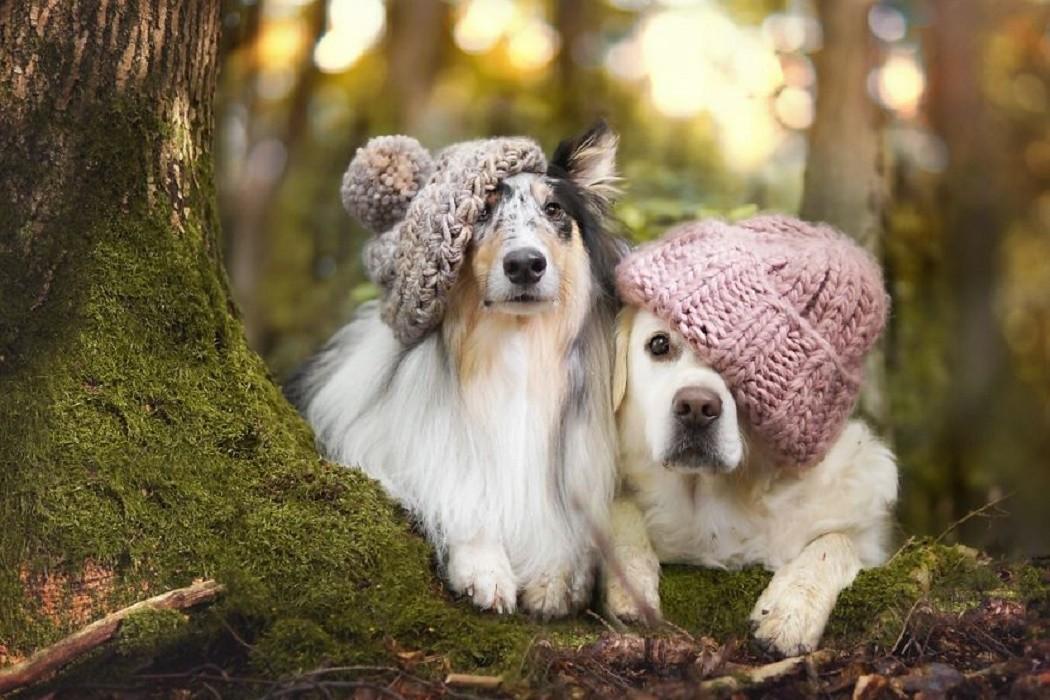 cani autunno3