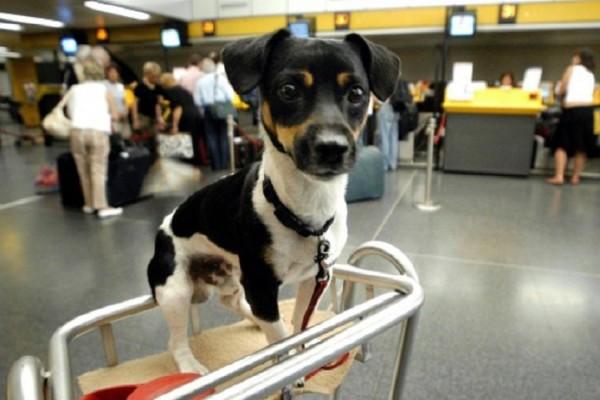 cane aeroporto