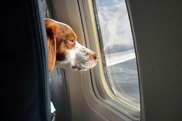 cani in aereo2