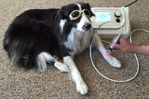 Tecnologie per i veterinari applicate (1)