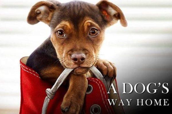 cane che torna a casa
