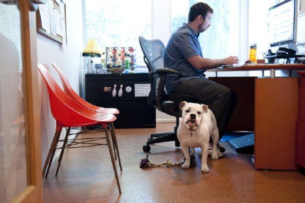 cani al lavoro roma