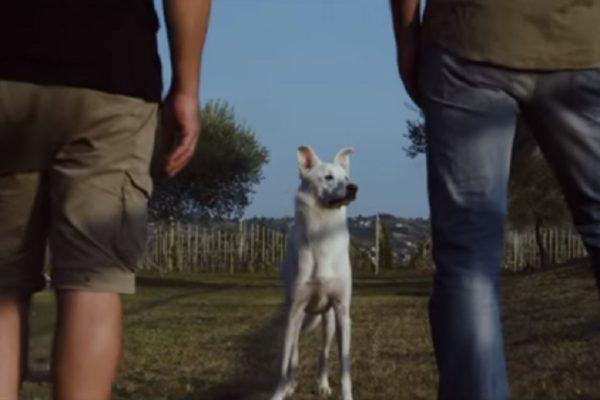 corto cane angelo
