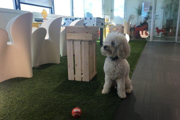 Sede Royal Canin 1