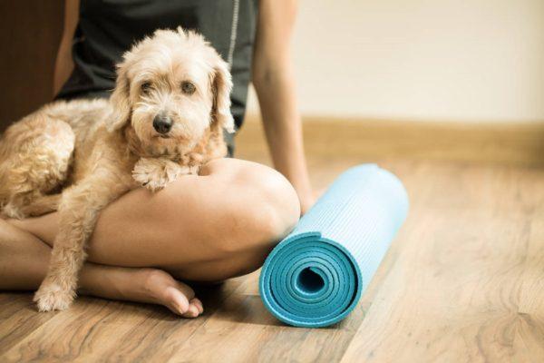 yoga col cane