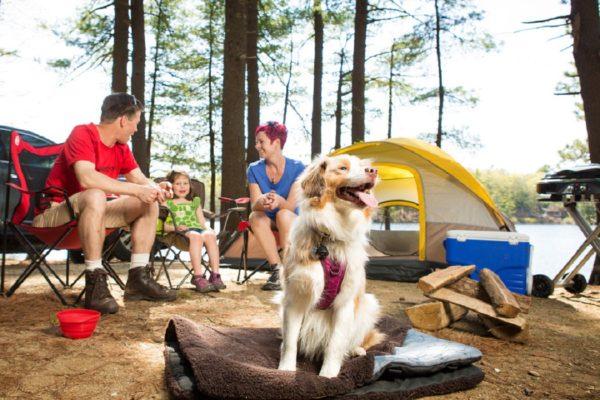 campeggio cani