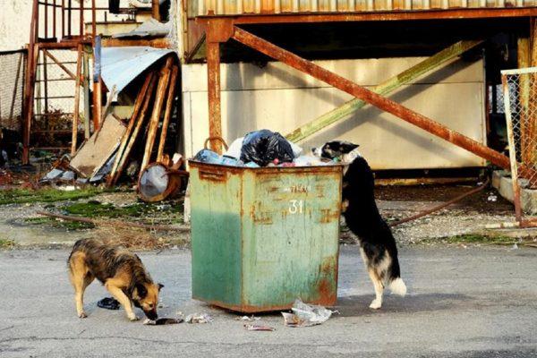 cani chernobil
