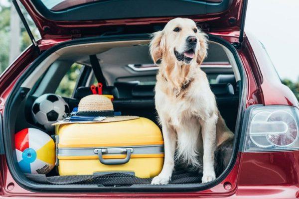 noleggio auto cani