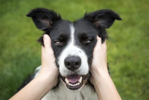 stress cani