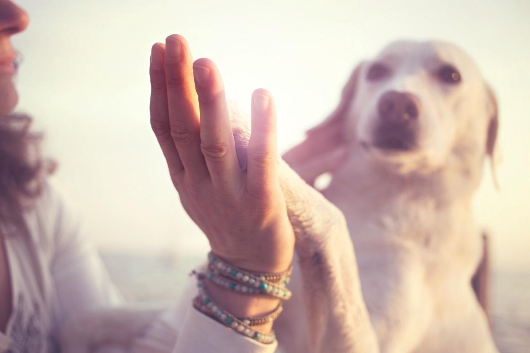 integratori per cani happy dog