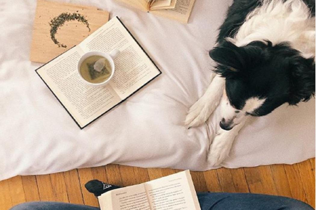 libri e cani